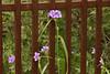 0988 - Flowers