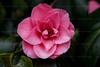 CRay-Flowers-0768