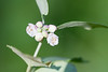 flower smugmug (6 of 26)