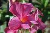 2011 09 24_Isabella visit_8828_edited-1