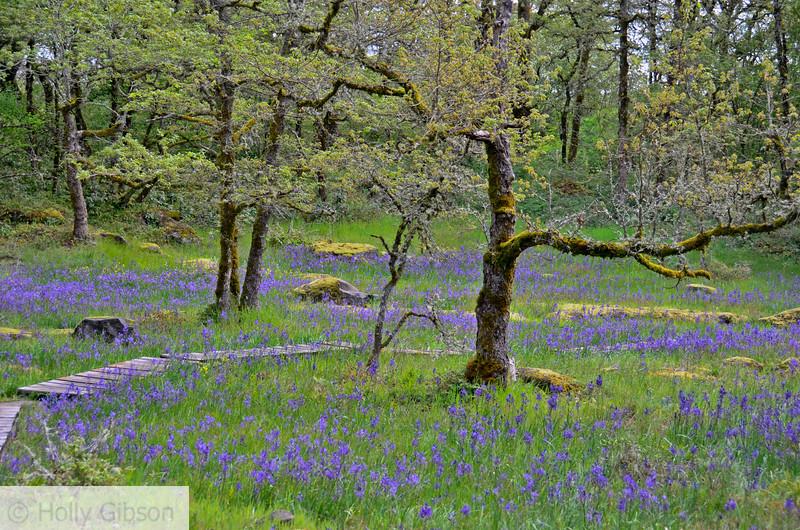 Camassia Nature Area - West Linn Oregon - 186