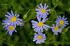 CRay-Flowers-0761