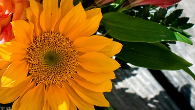 Sunflower on Mother's Day '09