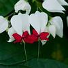 US Botanic Garden-13