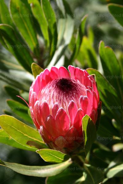 CRay-Flowers-6839