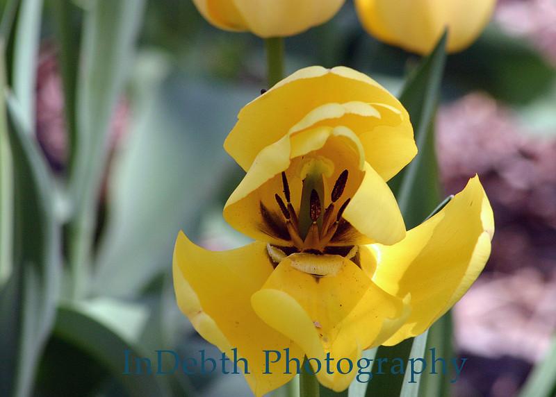 1560 - Flower