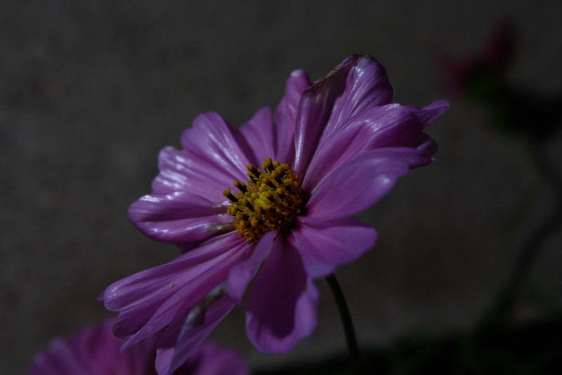 I like the way the off-camera flash gave this flower a moonlit, almost unreal look.