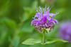 flower smugmug (24 of 26)