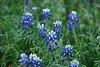 5712 - Wild Flowers
