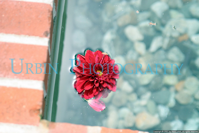 Red flower floating in water