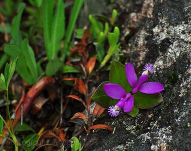 Beautiful Blooming Wildflowers