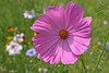 New Flowers1 013