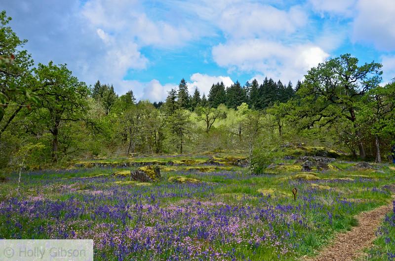 Camassia Nature Area - West Linn Oregon - 195