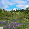 Camassia Nature Area - West Linn Oregon - 195