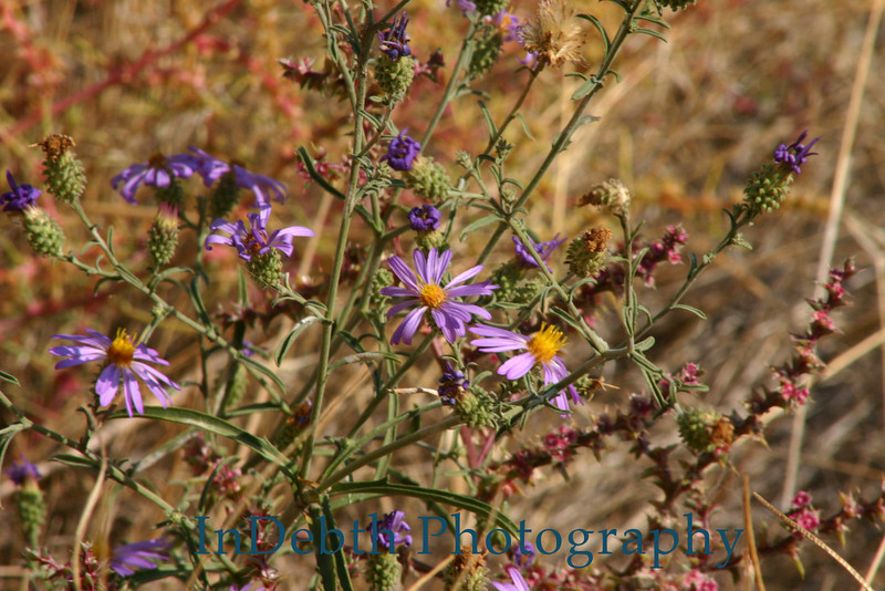 9796 Bend flower