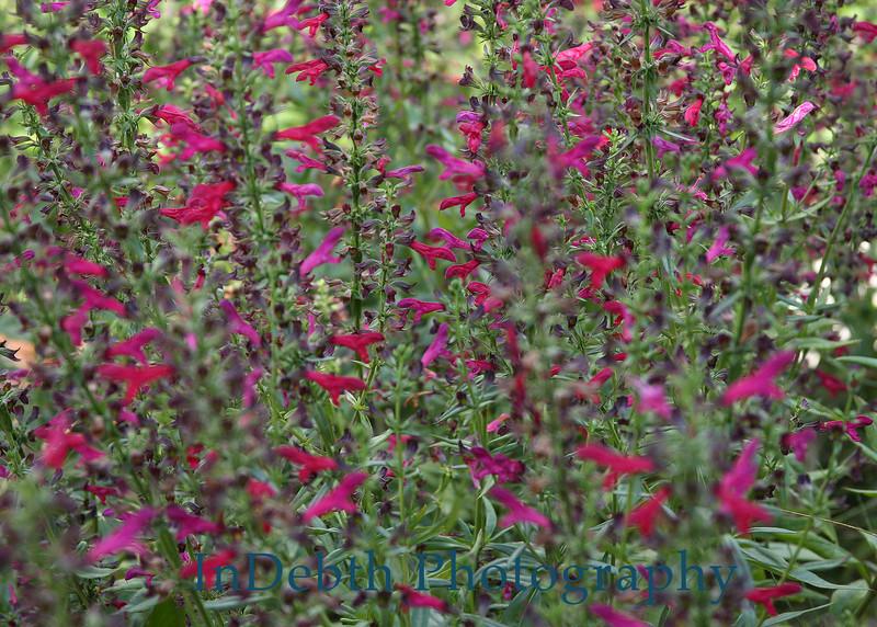 2681 - Flowers