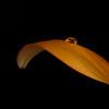 """<font color=""""#e9efb7"""">Orange Lily Petal"""