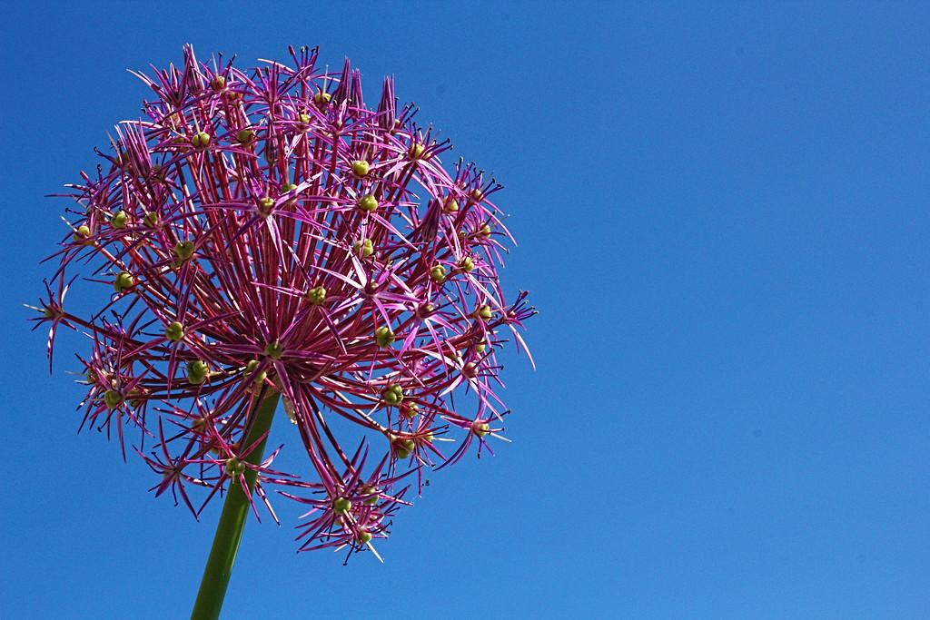 IMAGE: http://buttonmasher.smugmug.com/Flowers/flowers/i-dbz3tgD/0/XL/IMG_0873%20copy%202-XL.jpg