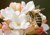 Bee_1989