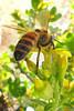 BeeCard_1294