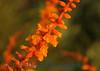 1546 - Cactus Flower