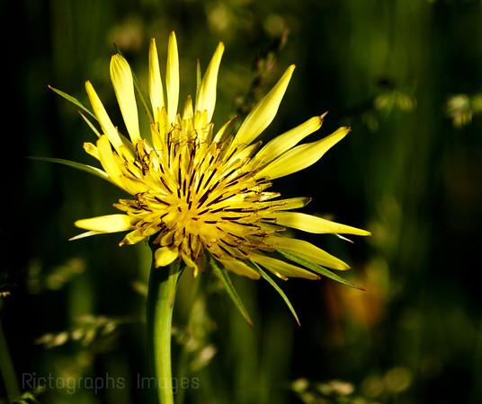 Beautiful Yellow Wildflower