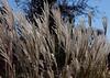 0658 - Grass