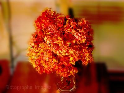 Dried Geranium Flowers