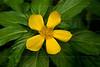 CRay-Flowers-0802