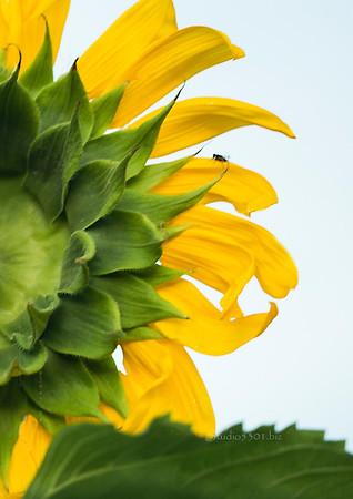 yellow flower & red buds  blur  2594