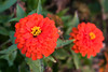Flowers_MG_5344 copy