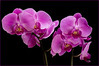 Orchids - Sony NEX5n - Sigma 30mm 2.8 DN