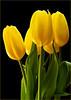 flowers-321sm