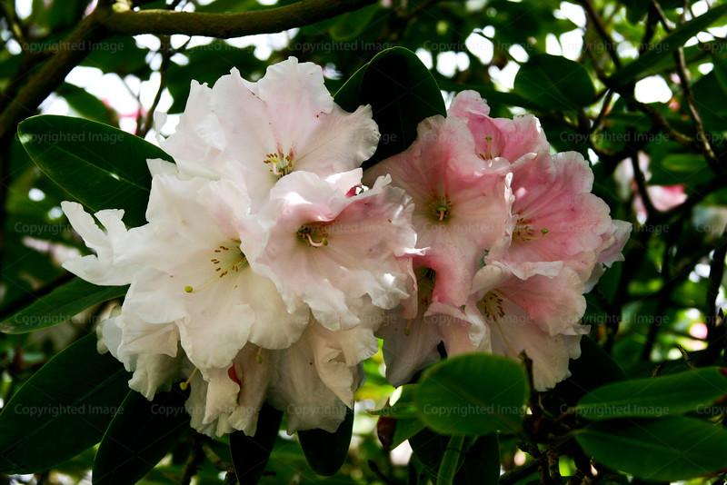 CRay-Flowers-6970