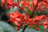 CRay-Flowers-0794