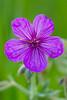 flower smugmug (15 of 26)