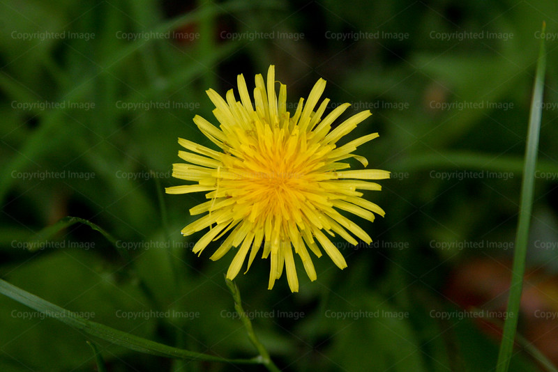 CRay-Flowers-0773