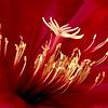 Pollen Buds