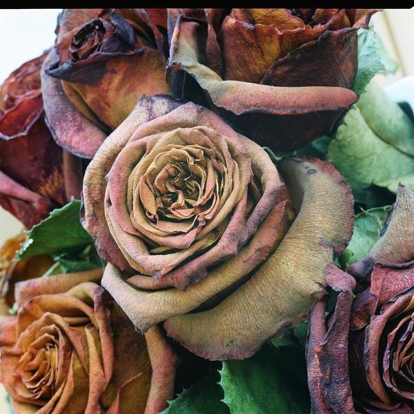 Dead roses 4