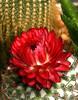 Flower_2894
