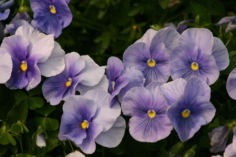 7308 - Atlanta Flowers