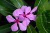 CRay-Flowers-0788