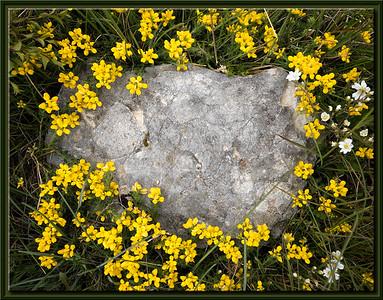 Blumenring um Stein