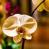 Hawaii_1179
