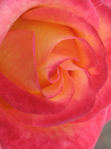 Fall Colors Trip 2009- Edisto Gardens,SC 017
