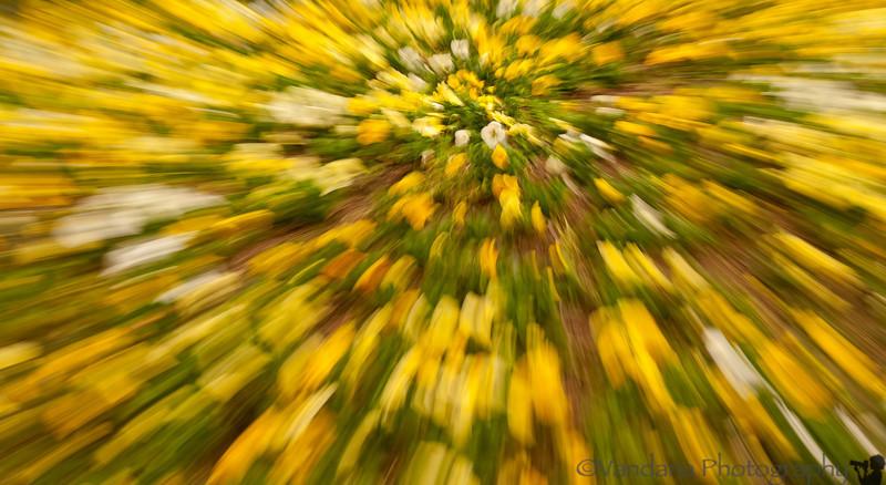 March 30, 2012 - Burst of spring color !