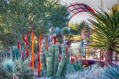 Cactus Chilluhy Garden 3432 hd