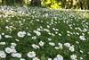 Flowers_5121