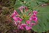 20060904-133727_30D_Flowers_0120