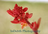 1856 - Cactus Flower